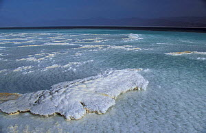 Lac Assal, crystallised salt on shoreline, 150m below sea level. Djibouti, East Africa sea water - Marguerite Smits Van Oyen