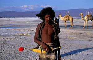 Afar tribesman mining salt, Lac Assal, Djibouti, East Africa. 150m below sea level. sea water - Marguerite Smits Van Oyen