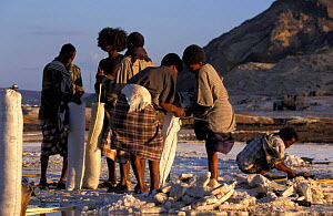 Afar tribesmen mining salt, Lac Assal, Djibouti, East Africa. 150m below sea level. sea water - Marguerite Smits Van Oyen