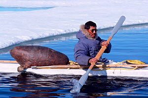 Inuit hunter in kayak with sealskin float and harpoons in front of ice floe, Canadian Arctic  -  DOC WHITE