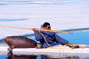 Inuit hunter takes aim with harpoon; sealskin float is on back of boat, Canadian Arctic  -  DOC WHITE