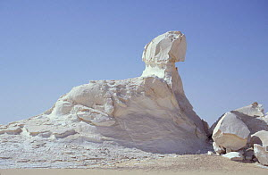 Chalk rock eroded by wind and weathering - resembles the Sphinx, White desert, Egypt  -  Dan Rees