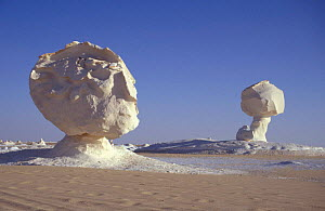Chalk rock eroded by wind and weathering to resemble mushroom shape, White desert, Egypt  -  Dan Rees