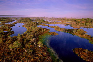 Mannikjarve raba bog viewed from tower, Endla Nature Reserve, Estonia  -  Niall Benvie