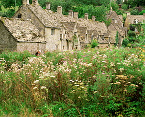 Old cottages with wild flowers, Arlington Row, Bibury, Cotswolds, Gloucestershire, UK.  -  Nick Turner
