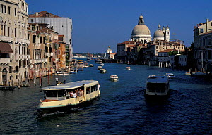 Grand canal with water buses + Santa Maria della Salute, Venice, Italy  -  Frank Tomlinson