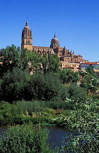 View of the New Cathedral, Salamanca, Spain  -  Frank Tomlinson