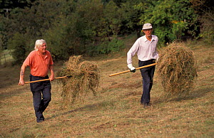 Wildlife Trust Volunteers cutting + raking hay by hand, Gloucestershire, UK  -  Nick Turner