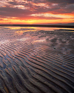 Mudflats at sunset during low tide, Solway Firth, Cumbria, UK.  -  Nick Turner