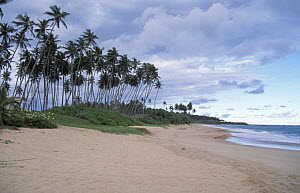 Tangelle beach, nesting site for endangered marine turtles, Sri Lanka  -  Nick Barwick