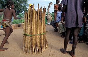 Harvested millet stowage at end of rainy season. Essential food source to locals, Sahel, Niger. - Christophe Courteau