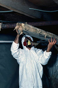 Removal of old Asbestos pipe insulation. Danger of release of carcinogenic fibres.  -  Phil Savoie