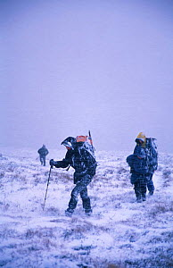 Hikers climb A Chailleach in blizzard, Monadhliath mtns, Highlands, Scotland. - Andrew Parkinson