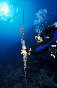 Receiver records pings of reef sharks with implanted transponders, Great Barrier Reef - Jurgen Freund