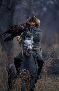 Mounted Kazakh hunter with Golden eagle trained to hunt wolf and fox, Kazakhstan, Asia  -  VINCENT MUNIER