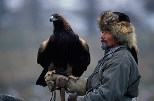 Kazakh hunter with Golden eagle trained to hunt wolf + fox for fur, Kazakhstan, Asia  -  VINCENT MUNIER