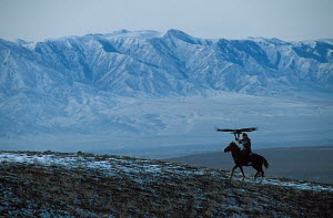 Mounted Kazakh hunter with Golden eagle trained to hunt wolf + fox for fur, Kazakhstan  -  VINCENT MUNIER