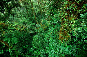 Tropical rainforest / cloud forest scenic, Monteverde National Park, Costa Rica  -  Ingo Arndt