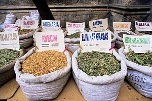 Medicinal plants for sale at market, Granada, Spain - Jose B. Ruiz
