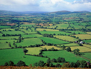 Patchwork pattern of fields and hedges, River Onny valley, Shropshire, England - Will Watson