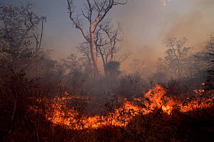 Bush fire lit by local people Caprivi strip, Namibia - Laurent Geslin