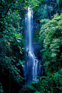 Picturesque waterfall in rainforest on road to Hana Maui Hawaii  -  Photo Resource Hawaii