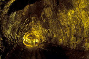 Thurston Lava Tube Volcanoes NP Big Island of Hawaii USA  -  Photo Resource Hawaii