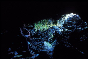 Man sitting in Kazumura cave world's longest lava tube Puna Hawaii Big Island  -  Photo Resource Hawaii