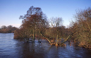 South Esk river in flood, Montrose, Angus, Scotland, UK  -  Niall Benvie