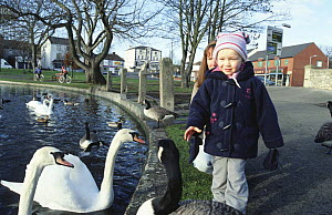 Child with swans, geese and duck at village pond, Yorkshire, UK - Paul Johnson