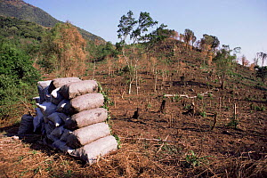 Charcoal production on site of former tropical rainforest habitat, cleared for other use, Tongo, Democratic Republic of Congo, formerly Zaire  -  Jabruson