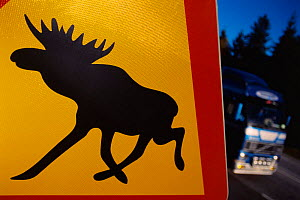 Moose warning sign on roadside, Sweden. - Staffan Widstrand