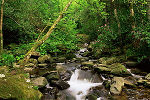 Downstream from Torc waterfall, Killarney NP, County Kerry, Southern Ireland  -  DAVID TIPLING