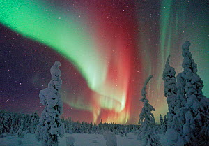 Northern lights, Lapland, Finland  -  Jorma Luhta