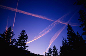 Vapour trails in sky at sunset, Yosemite, California, USA - GRAHAM HATHERLEY