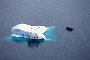 Tourists in dinghy watching Crabeater seals on iceberg, Antarctica.  -  Mark Carwardine