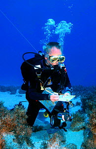Diver surveying coral reef, Bounty Bay, Pitcairn Island, South Pacific.  -  Dan Burton