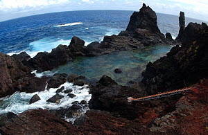 Rocky coast, Pitcairn island, South Pacific.  -  Dan Burton