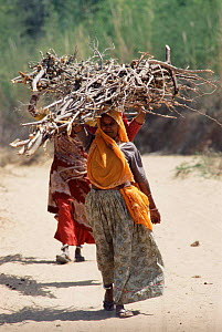 Women carrying wood illegally gathered outside Ranthambhore National Park, Rajasthan, India  -  Toby Sinclair