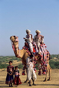 Rabhari family with domesticated camel, Kutch, Gujarat, India  -  Toby Sinclair