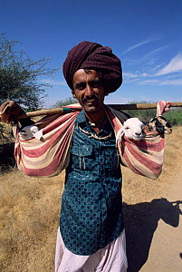 Rabhari shepherd, Kutch, Gujarat, India  -  Toby Sinclair