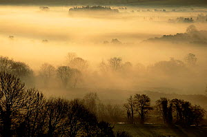 Dawn mist over farmland countryside, Ireland  -  Ian McCarthy