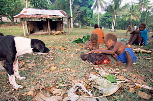Children play with Pig's head after traditional slaughter, Espirito Santo, Vanuatu  -  Justine Evans