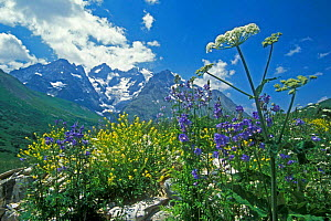 Mixed Wild flowers in the Alps, France  -  Philippe Clement