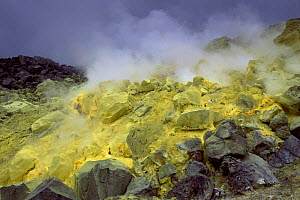 Sulphur fulmerole in crater of active volcano, Sierra Negra, Isabela Is, Galapagos  -  Pete Oxford