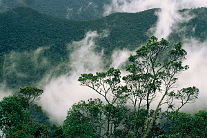 Podocarpus National Park, Andes, Ecuador - Pete Oxford