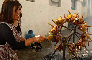 Cooking Cui / Guinea Pigs on rotating spit, Pelileo Town, Andes, Ecuador 2004 - Pete Oxford
