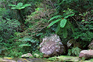 Large boulders in rainforest, Iriomote Island, Okinawa, Japan - Rob Tilley
