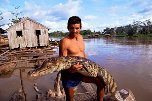 Caiman {Caiman crocodilus} killed for subsistence food, Mamairaua Ecol. Stn, Brazil  -  Luiz Claudio Marigo
