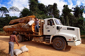 Transporting Mahogany tree {Swietenia macrophylla} timber by lorry,  Maraba, Brazil  -  Luiz Claudio Marigo